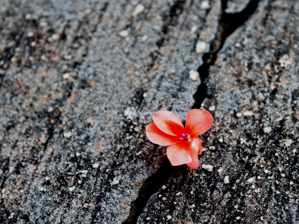 flower-crack-wood